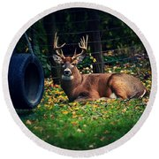 Buck In The Back Yard Round Beach Towel