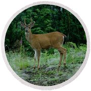 Round Beach Towel featuring the photograph Buck by Rod Wiens