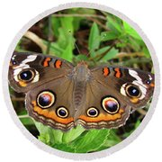 Round Beach Towel featuring the photograph Buckeye Butterfly by Donna Brown