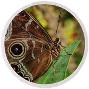 Round Beach Towel featuring the photograph Blue Morpho Butterfly by Olga Hamilton