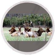 Bull Elk And His Girls Round Beach Towel