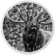 Bull Elk Bugling Black And White Round Beach Towel