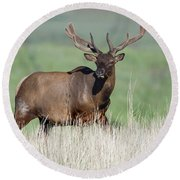 Round Beach Towel featuring the photograph Bull Elk In Velvet by Jack Bell