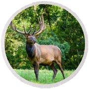 Bull Elk Round Beach Towel