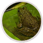 bull frog on a Lilly pad Round Beach Towel