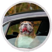 Bulldog Bliss Round Beach Towel by Jeanette C Landstrom