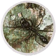 Bullet Ant Round Beach Towel by Gregory G. Dimijian, M.D.