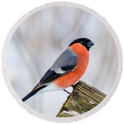 Bullfinch On The Edge Round Beach Towel