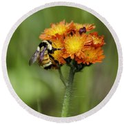 Bumble And Hawk Round Beach Towel