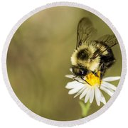 Bumble Bee Macro Round Beach Towel by Debbie Green