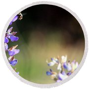 Bumble Bee On Lupine Round Beach Towel