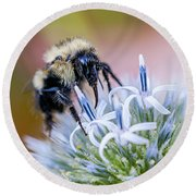 Bumblebee On Thistle Blossom Round Beach Towel