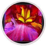 Burgundy Iris Enhanced Round Beach Towel