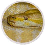 Burmese Python Round Beach Towel