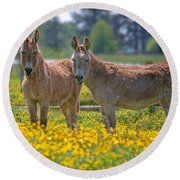 Burros In The Buttercups Round Beach Towel by Suzanne Stout