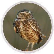Round Beach Towel featuring the photograph Burrowing Owl At Sunset by Doug Herr