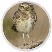 Round Beach Towel featuring the photograph Burrowing Owl by Bryan Keil