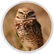Burrowing Owl Impressions Round Beach Towel