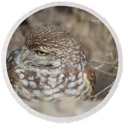 Burrowing Owl Round Beach Towel