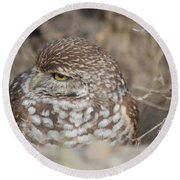 Burrowing Owl Round Beach Towel by Oksana Semenchenko