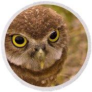 Burrowing Owl Portrait Round Beach Towel by Anne Rodkin