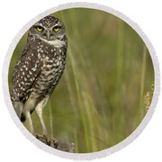 Burrowing Owl Stare Round Beach Towel