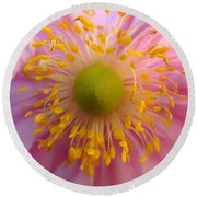 Windflower Round Beach Towel