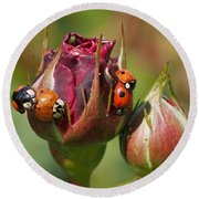 Busy Ladybugs Round Beach Towel
