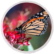 Round Beach Towel featuring the photograph Butterfly 2 by Leticia Latocki