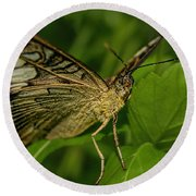 Round Beach Towel featuring the photograph Butterfly 2 by Olga Hamilton