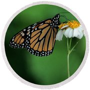 Round Beach Towel featuring the photograph Butterfly 3 by Leticia Latocki