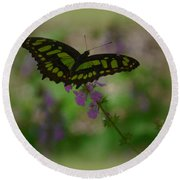 Round Beach Towel featuring the photograph Butterfly 4 by Leticia Latocki