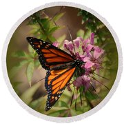 Round Beach Towel featuring the photograph Butterfly 5 by Leticia Latocki