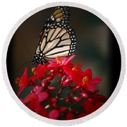 Round Beach Towel featuring the photograph Butterfly 6 by Leticia Latocki