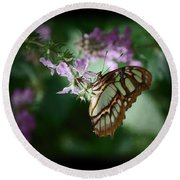 Round Beach Towel featuring the photograph Butterfly 7 by Leticia Latocki