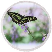 Round Beach Towel featuring the photograph Butterfly 8 by Leticia Latocki