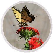 Butterfly And Maltese Cross 1 Round Beach Towel by Aaron Aldrich