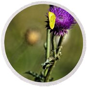 Butterfly And Purple Thistle Round Beach Towel