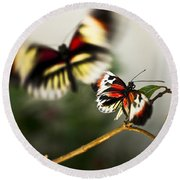 Butterfly In Flight Round Beach Towel