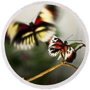 Butterfly In Flight Round Beach Towel