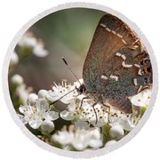 Butterfly In The Garden Round Beach Towel