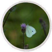 Butterfly In White 2 Round Beach Towel