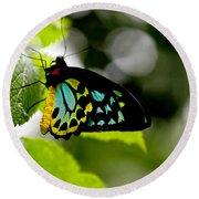 Butterfly Iv Round Beach Towel by Tom Prendergast