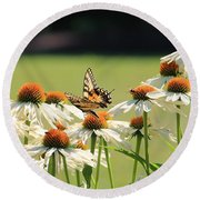 Butterfly On Echinacea Round Beach Towel