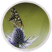 Round Beach Towel featuring the photograph Butterfly On Thistle by Peter v Quenter