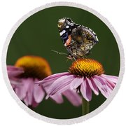 Round Beach Towel featuring the photograph Butterfly Red Admiral On Echinacea by Peter v Quenter