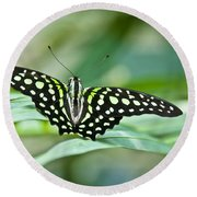 Butterfly Resting Color Round Beach Towel