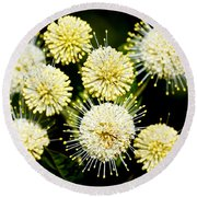 Buttonbush Round Beach Towel