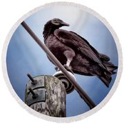 Buzzard Beauty Round Beach Towel