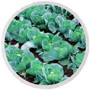 Cabbage, Yamhill Co, Oregon, Usa Round Beach Towel by Panoramic Images